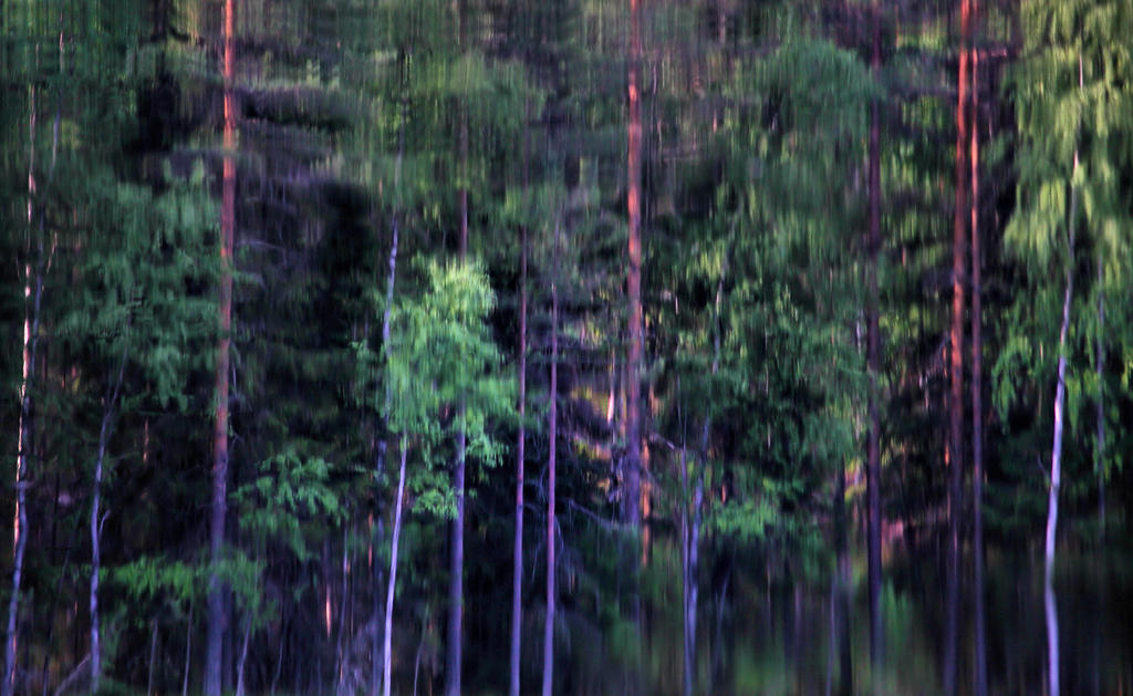 forest fantasy by KariLiimatainen