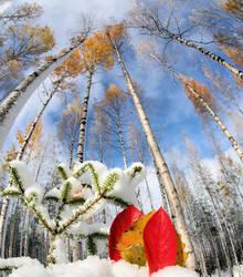 autumn or winter