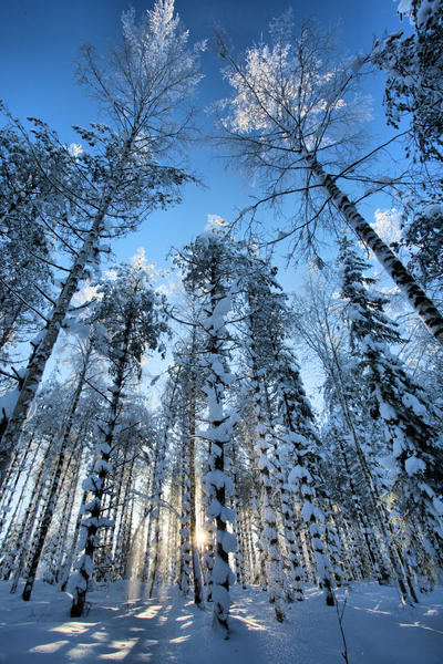 forest in winter by KariLiimatainen