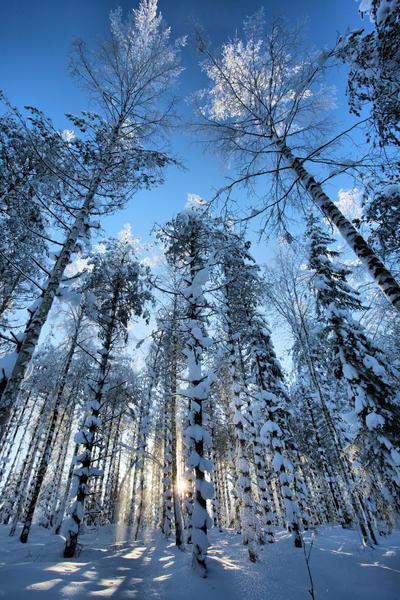 forest in winter by KariLiimatainen