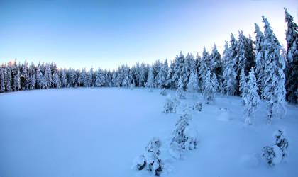trees meeting by KariLiimatainen