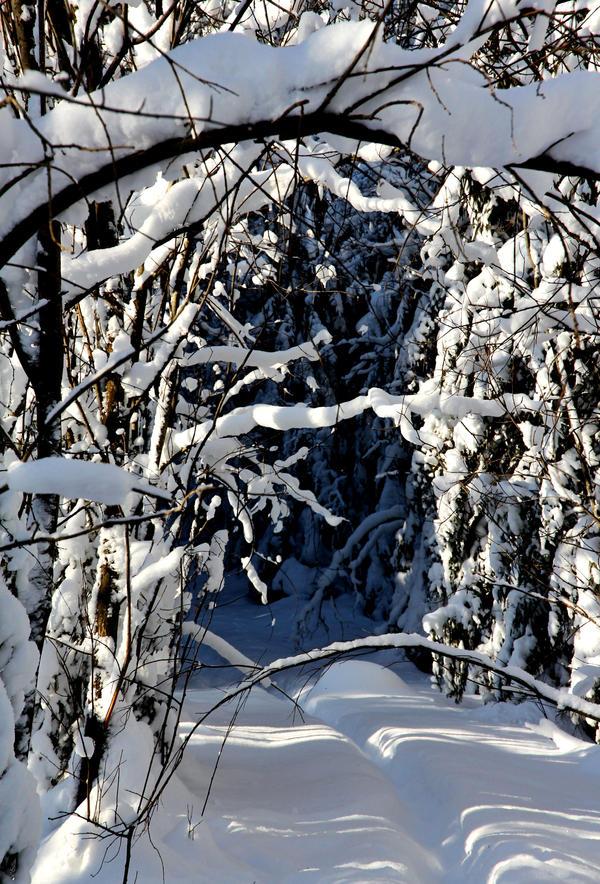 winter forest path by KariLiimatainen