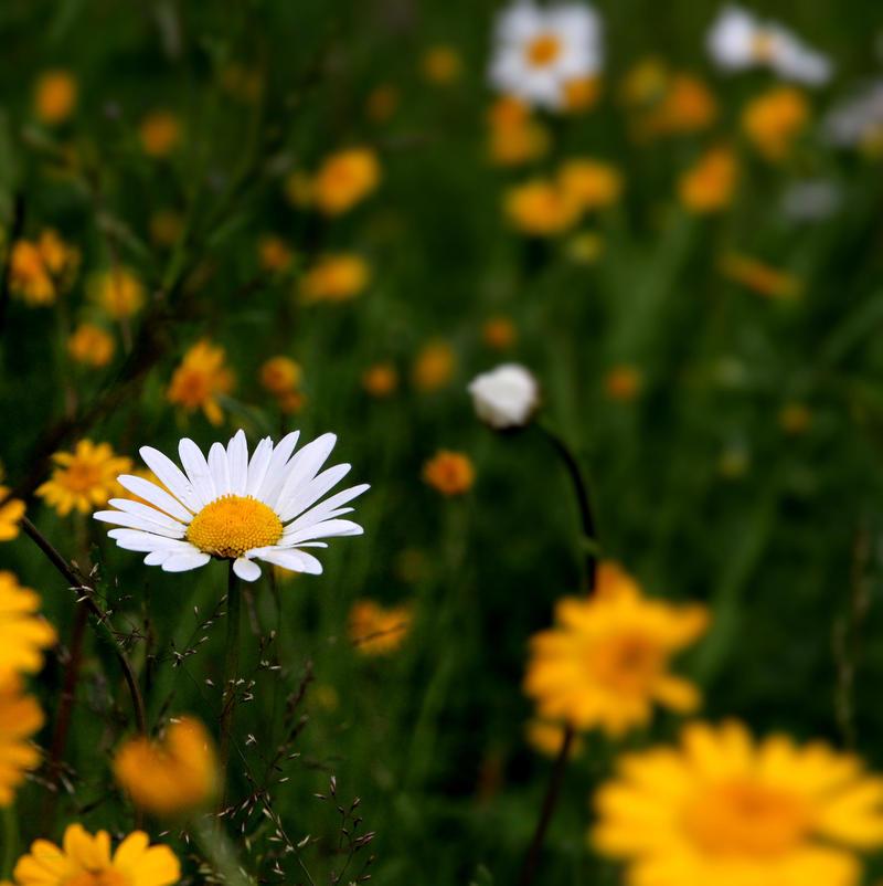 summer feeling by KariLiimatainen