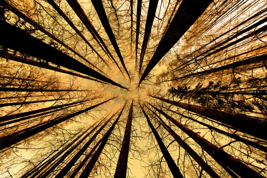 Trees and sky by KariLiimatainen
