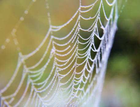 Web droplets