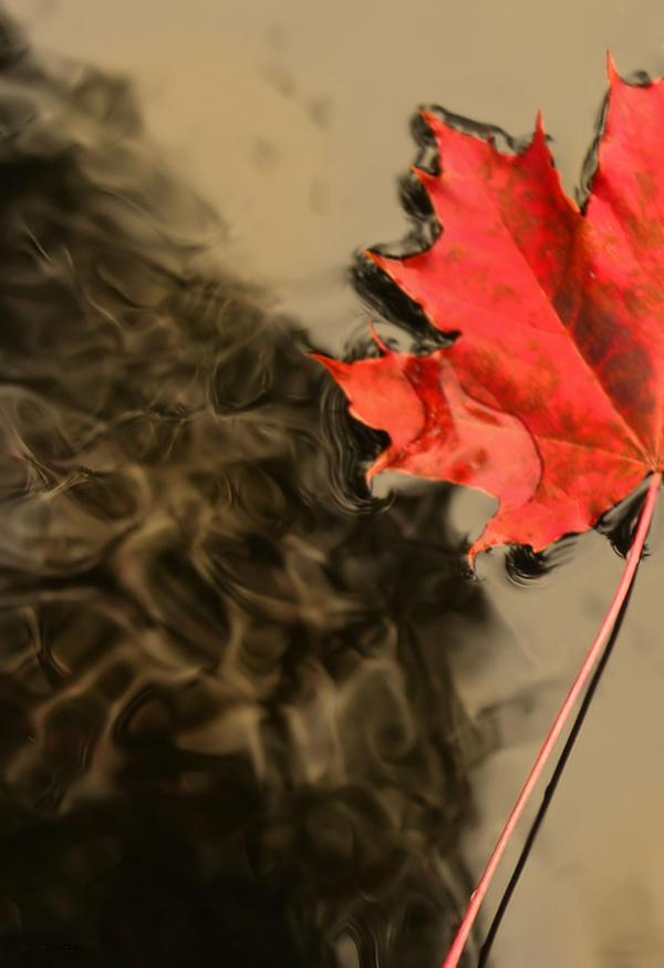 autumn wake up by KariLiimatainen