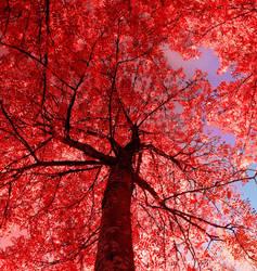 red thing by KariLiimatainen