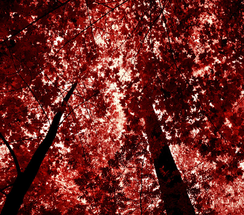 red forest by KariLiimatainen
