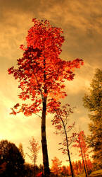 Glowing autumn colors