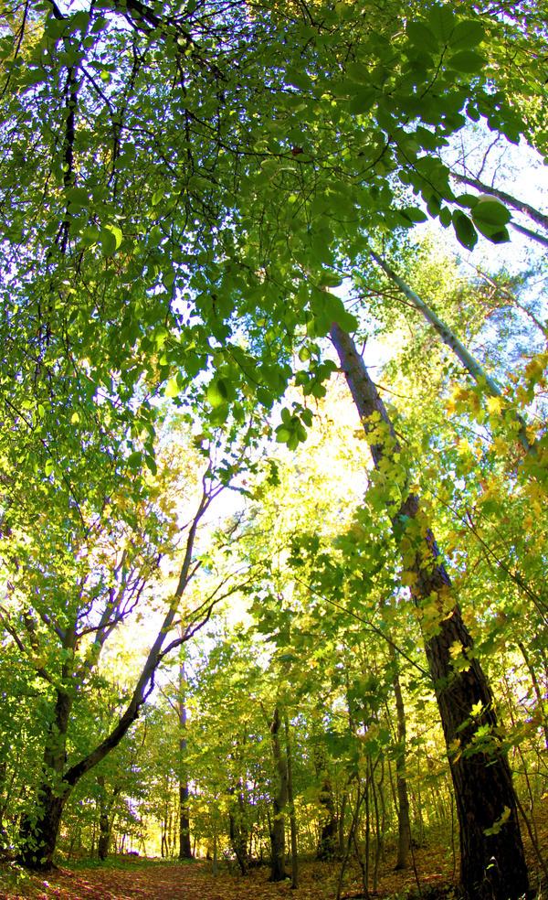 Walking in autumn park by KariLiimatainen