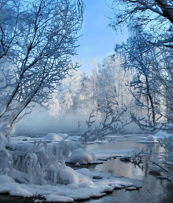 Frosty trees in winter wonderland by KariLiimatainen
