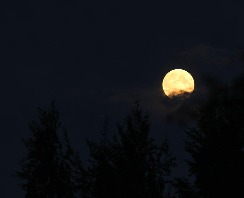 Full Moon over Forest II by KariLiimatainen