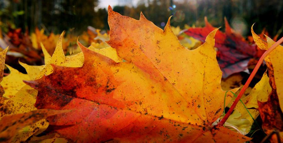 autumn 1 by KariLiimatainen