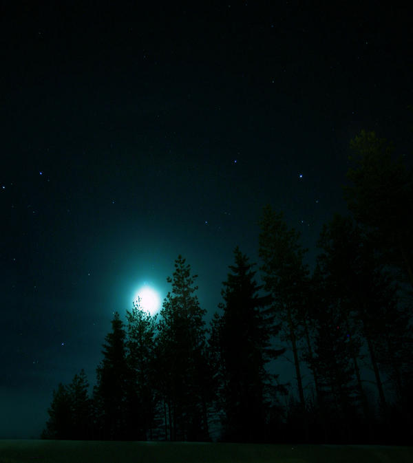 Night in the forest by KariLiimatainen