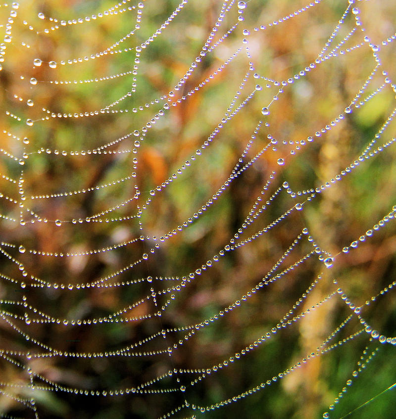 spider art II by KariLiimatainen