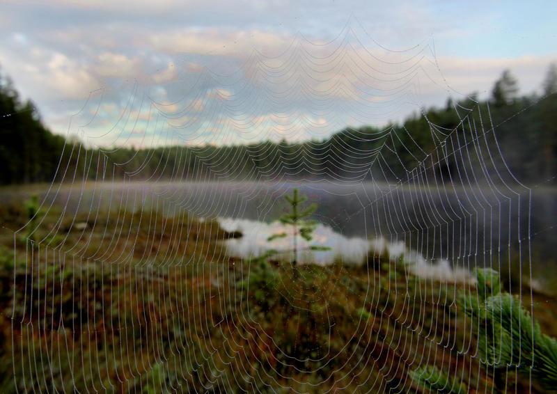 target by KariLiimatainen