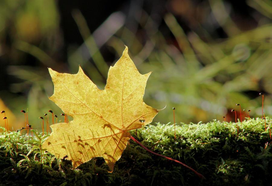 autumn in forest .. by KariLiimatainen