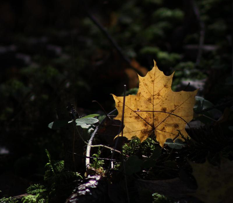 autumn in forest II by KariLiimatainen