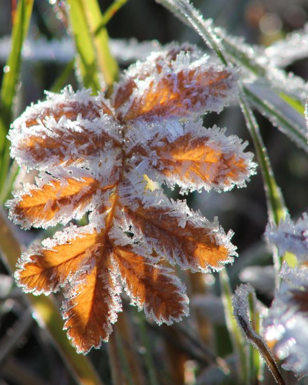 frozen by KariLiimatainen