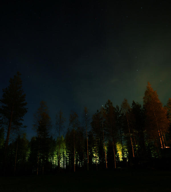 forest at night by KariLiimatainen