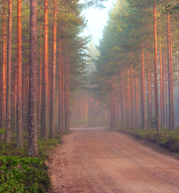 forest view by KariLiimatainen