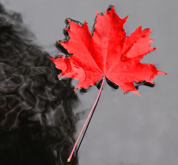 red.... by KariLiimatainen