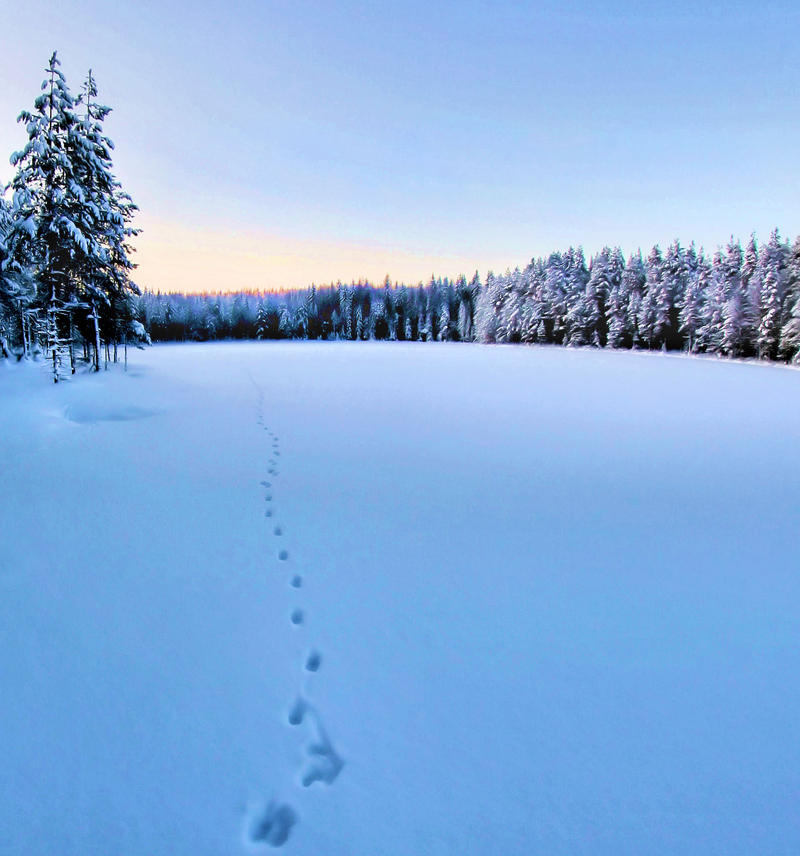 tracks in the snow by KariLiimatainen