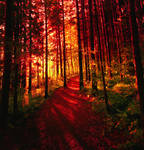 red forest ..