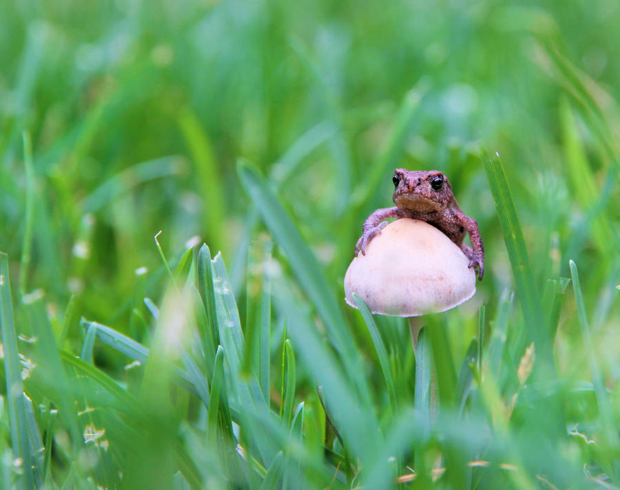 Small frog by KariLiimatainen