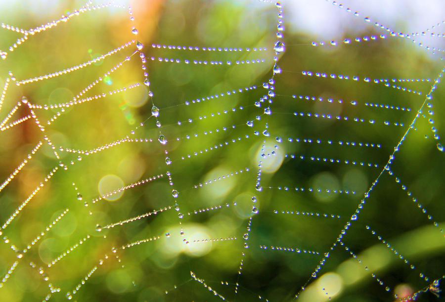 spider web by KariLiimatainen