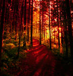 like a burning forest