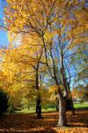 Autumn in city..