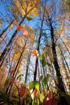 Color splendor in forest