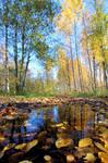 Beautiful autumn path.