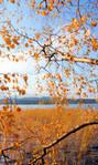 autumn colours . ....