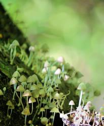 Little mushrooms by KariLiimatainen
