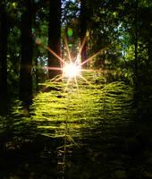 Light in the woods by KariLiimatainen