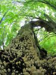 Mushrooms climb to the tree
