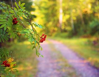 Autumn is coming. by KariLiimatainen