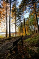 Autumn path by KariLiimatainen