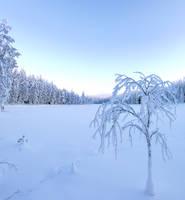 Winter time  . . by KariLiimatainen
