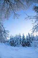 Forest in winter. by KariLiimatainen