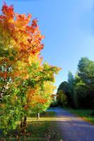 Autumn is here. by KariLiimatainen