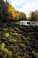Beautiful green rocks in the middle of autumn