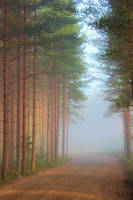 Mystical forest by KariLiimatainen