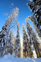 winter time . by KariLiimatainen