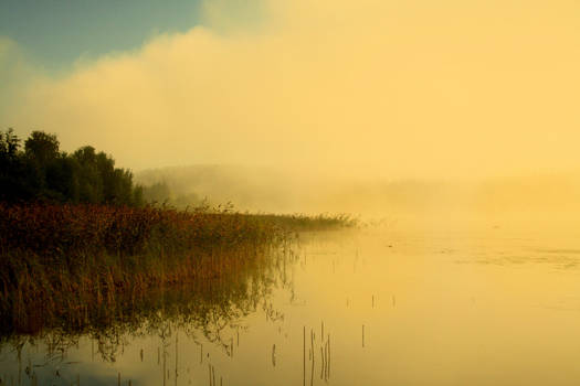 Fog on the lake...
