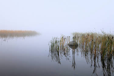 Fog on the lake . .