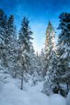 Forest wonder.