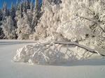 Pure snow by KariLiimatainen